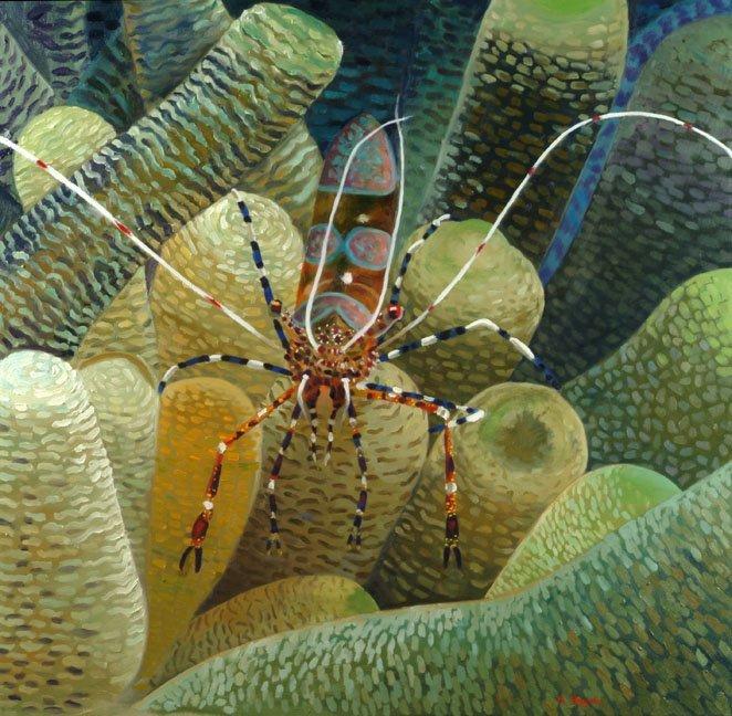 cleaner shrimp web